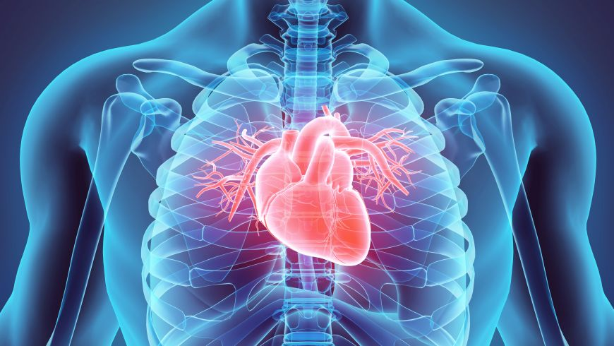 /documents/56164/1162014/3D-illustration-of-Heart%2C-medical-concept.-530199842_7000x6000.jpg/2d8060b3-9ddb-42bc-b24a-db163e7d9195?t=1493899868583